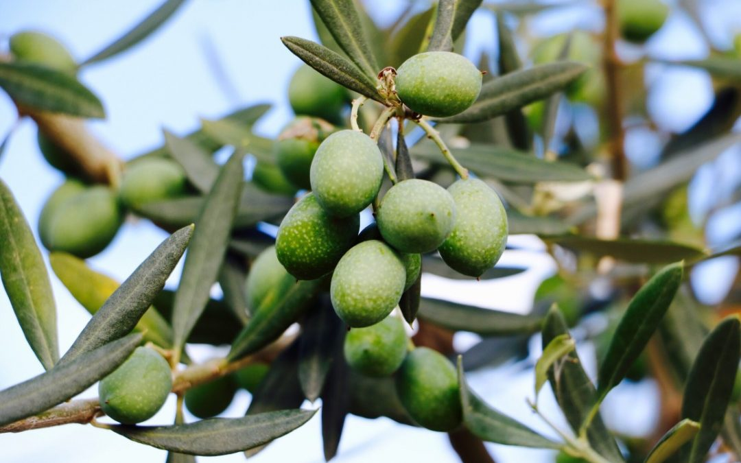 Comment bien choisir l'huile d'olive ?